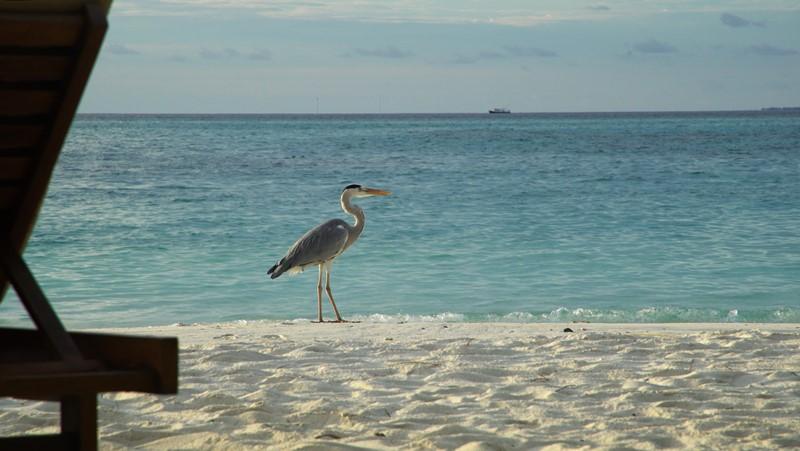 Os visitantes da praia