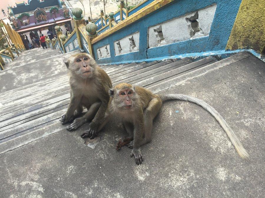 Penang Malasia - Batu Caves - Macacos